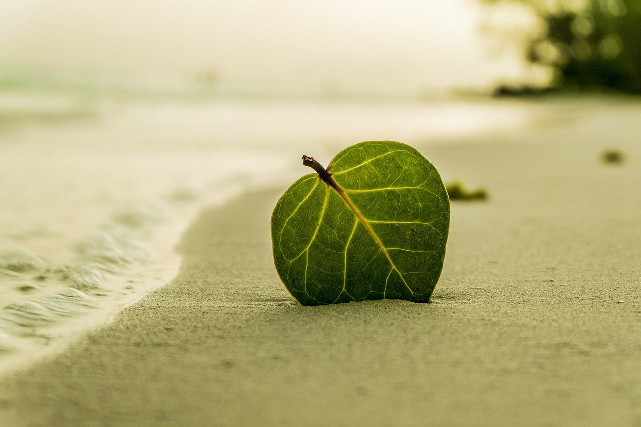 beach-394503_1280